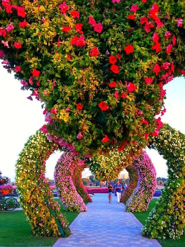Awesome Dubai Miracle Garden
