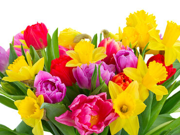 Bouquet Colorful Tulips