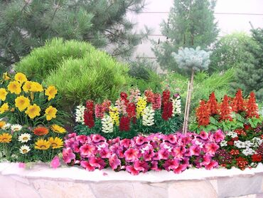 Colorful flower garden