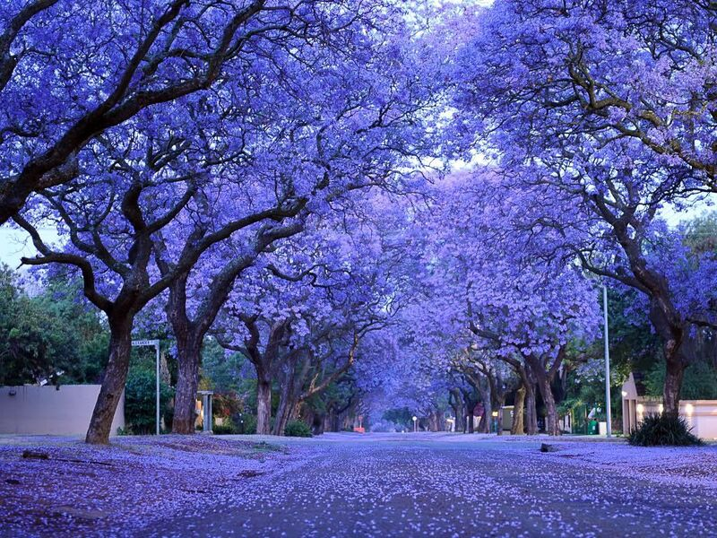 Gorgeous flowering trees