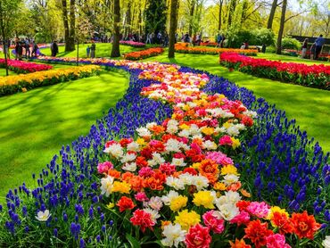 Keukenhof - Flower park in the Netherlands