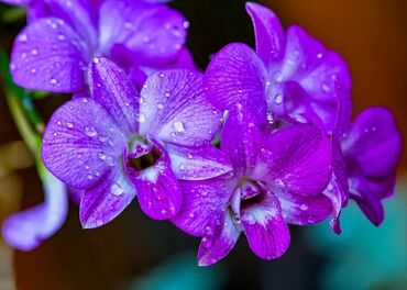 Gorgeous purple orchid