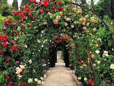 Beautiful rose arch
